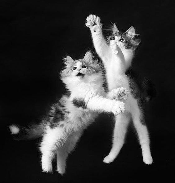 That Friday feeling ✨  Almost 200 new followers this week! Thank you guys for all the support! 💜 We will be celebrating with beer and rock n' roll ✨ 🎶 🍻 💜 #Friday #cats #thankful #hellaholics #crazycatlady #cute #instagood#fridaymood #kitten #blackandwhite #fluffy