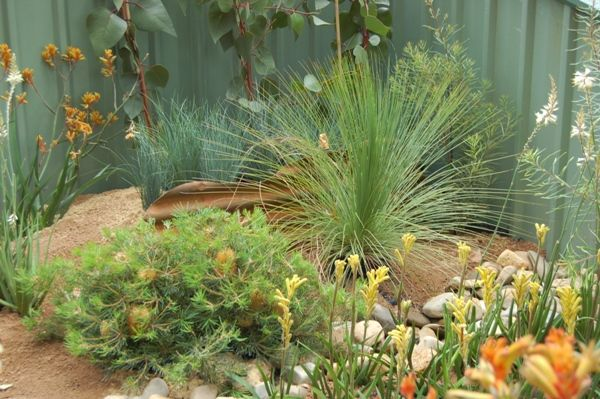 Best 25 native gardens ideas on pinterest australian for Australian native garden design ideas
