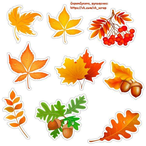 Листья для открытки шаблоны цветные, поздравлением дню
