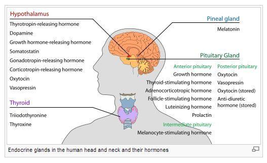 Natural Ways To Increase Adrenal Function
