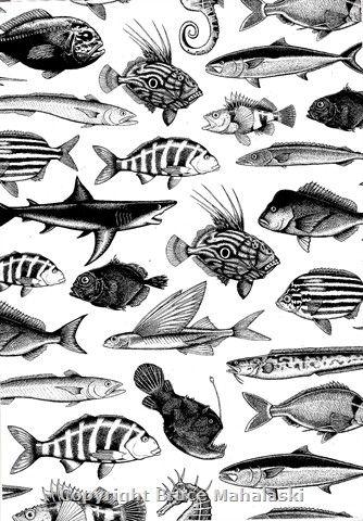 New Zealand Fish Species