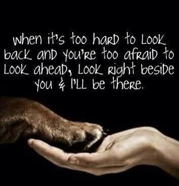 I have 3 dogs and right now, glad for the company and unconditional love. Click on the photo to see more of the wonderful quotes