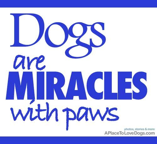 Yes,yes they are!! <3: Doggie, Dogs, Miracles With Paws, Pets, Dog Quotes, Baby, Friend, Animal