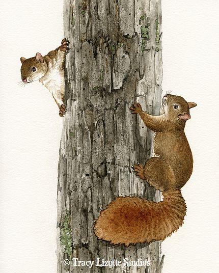 Squirrel Tag  8x10 archival watercolor by TracyLizotteStudios, $20.00