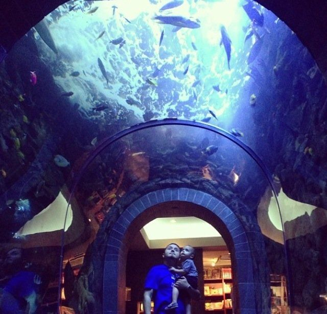 The Dallas World Aquarium - Dallas, TX, United States