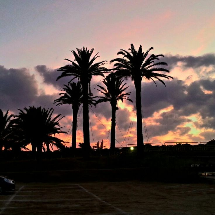 Palme di Porto Pino al tramonto - 24 agosto 2015