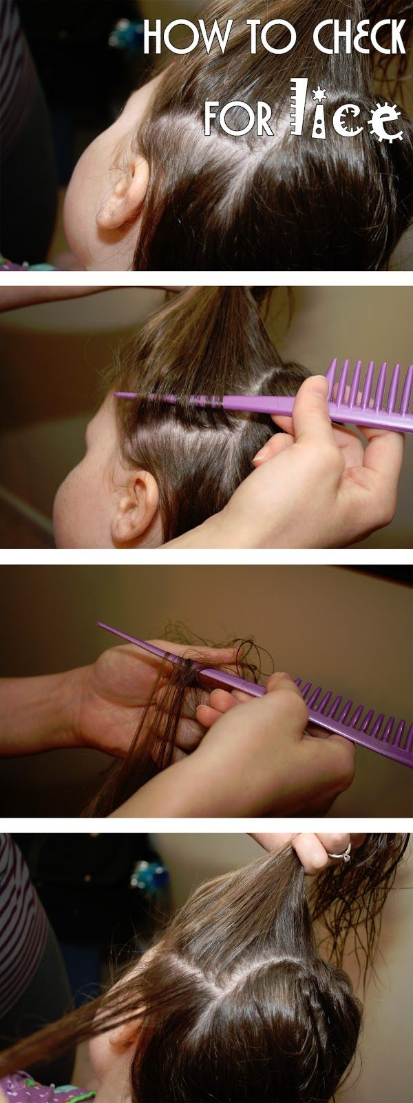 25 unique lice shampoo ideas on pinterest tea tree oil lice love my lists how to check for lice and nits how we get rid of them ccuart Gallery