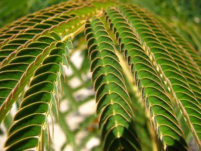 Características del reino plantae | eHow en Español
