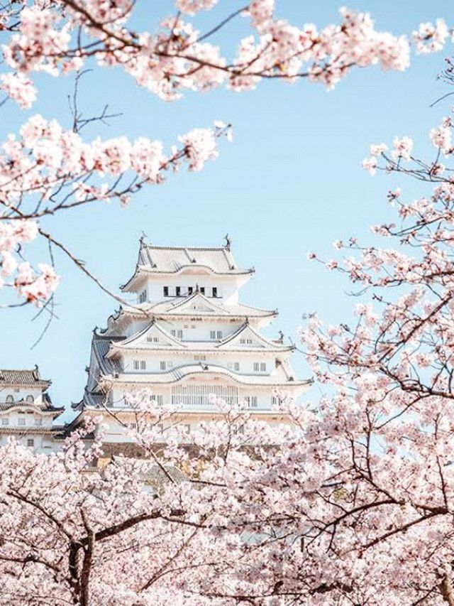If you're planning on visiting Japan in the spring, we've outlined a few more reasons why springtime is the best time of year to go.