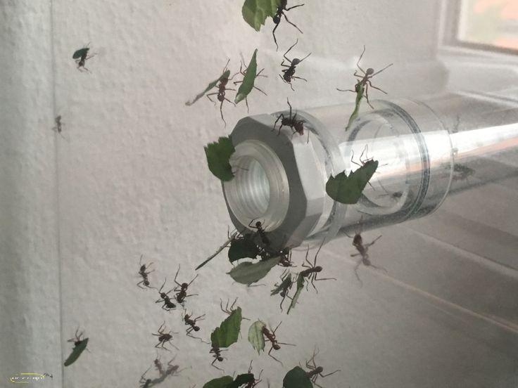 Die besten 25+ Ameisenkolonie Ideen auf Pinterest Arten von - ameisen im wohnzimmer