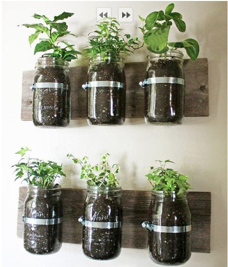 herb planters -- most definitely happening in the front room or near the side of the kitchen