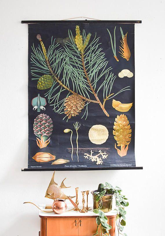 Botanical prints botanical posters antique botanical prints