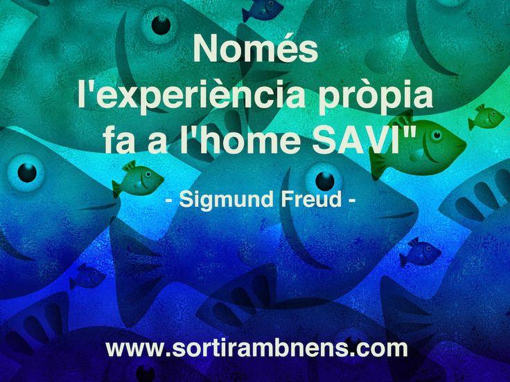 """La frase per pensar de Sortir amb nens:  """"Només l'experiència pròpia fa a l'home savi"""" ´-Sigmund Freud -  #frasesperpensar #sortirambnens #ambnens #nens #frasesboniques #frasesencatalà #encatalà"""