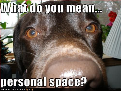 ROFL!! Dobermans do NOT understand the concept of personal space.
