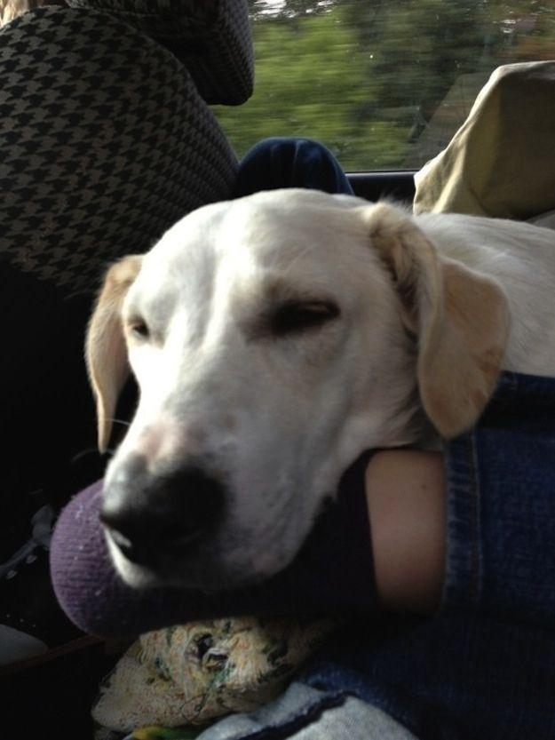 Dog Having Seizures Every Day