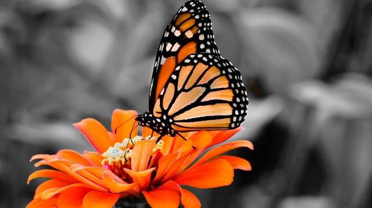 butterfly hq wallpaper 1024x768 - photo #11