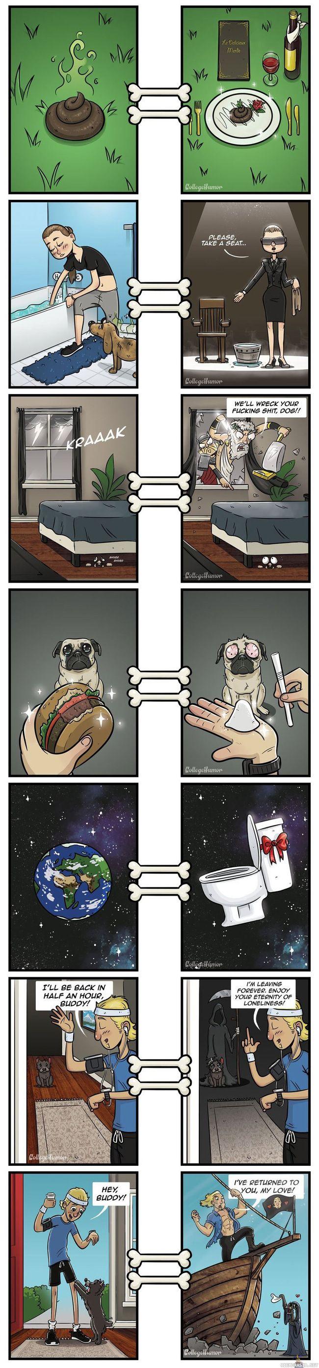 Miten koira näkee asiat