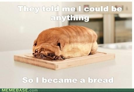 Puppies, Photos Manipulation, Loaf, Breads, Pugs, Funny Dogs Pictures, Funny Animal, So Funny, Animal Funny