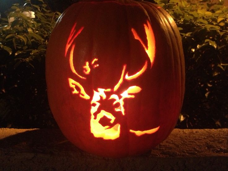 Creative pumpkins carved to look like wildlife
