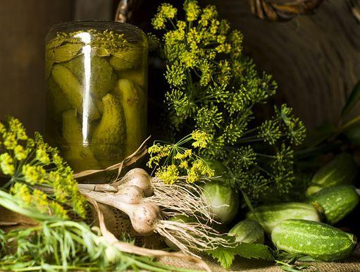 Rychlé rychlokvašky: for 4 l jar: 1 l octa, 20 dkg soli, 70 tablet sladidla, cely pepr, nove koreni, hrebicek,  priolozime koprem: okurky napichame, naskladame do sklenice, a zalijeme horkym nalevem s korenim. Hotove za 24 hod. Jako Znojemske okurky.