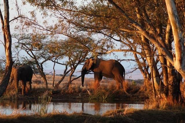 #Elephants at Elephant Rock Lodge #Safari http://www.nambiti.com/explore-game-lodges/