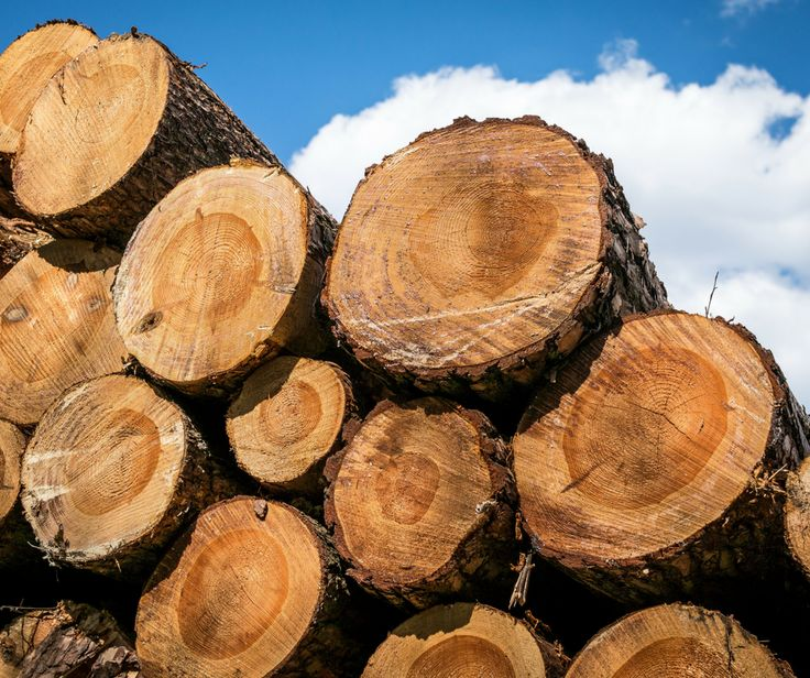 Caring For The Woods And Lumbering Sustainable Timber | Forestry