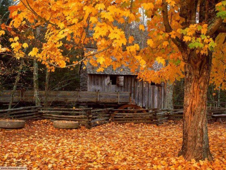 Cozy Fall Hd Wallpaper Fall Scenes Wallpaper And Screensavers Autumn Yard