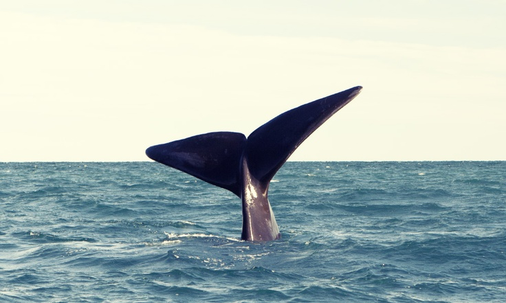Some incredible whale watching photos from Puerto Madryn.