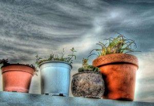 Dicas sobre o cultivo em vasos