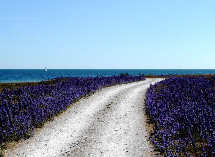 "On Gotland, something ""almost Tarkovsky"" -2- by Sergei Dmitriev Viluman"