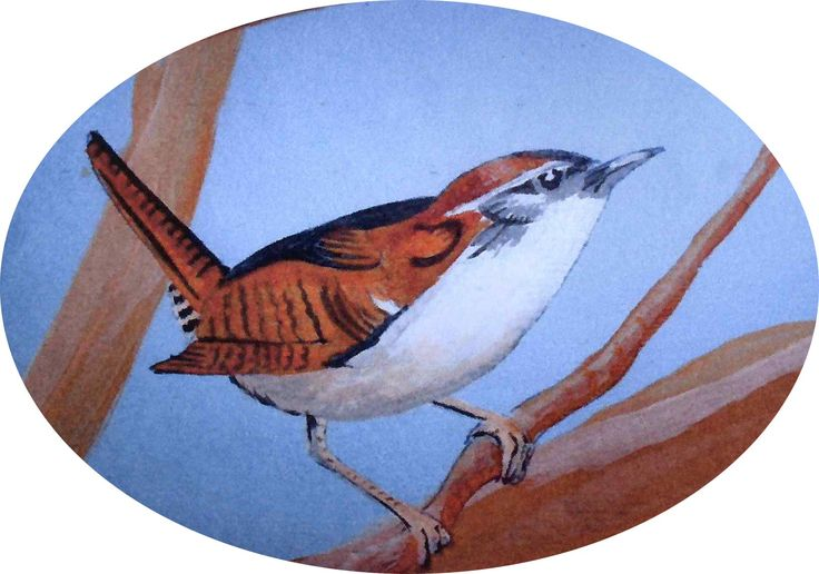 Tiny Wren, detail from Oriental mural