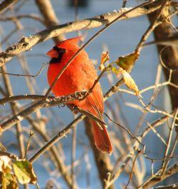 Bird Houses for Sale | wooden bird house wholesale bird houses bird houses for sale
