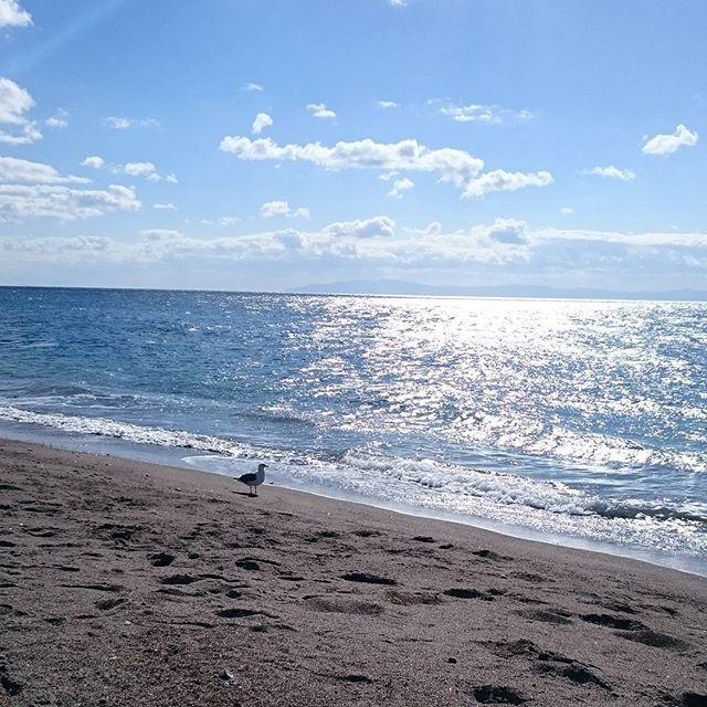 【hieboorin】さんのInstagramをピンしています。 《海~❤光ってる✨✨ 今度はオプションでカモメを付けました。飛行機ギリギリまでここにいます‼ #函館#湯の川温泉#海#海大好き#イマソラ#津軽海峡#カモメ#鴎#放浪カモメはどこまでも#spitz》