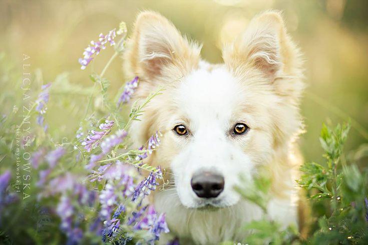 Não há quem não se apaixone por imagens de cães, ainda mais quando feitas por algum profissional. Alicja Zmyslowska é uma fotógrafa polonesa que se especializou em capturar retratos impressionantes de cachorros e tem feito muito sucesso pelo mundo.