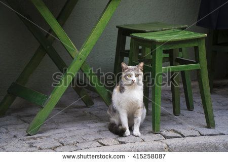 Cat waiting for food under table in a street tea cafe at Istanbul.