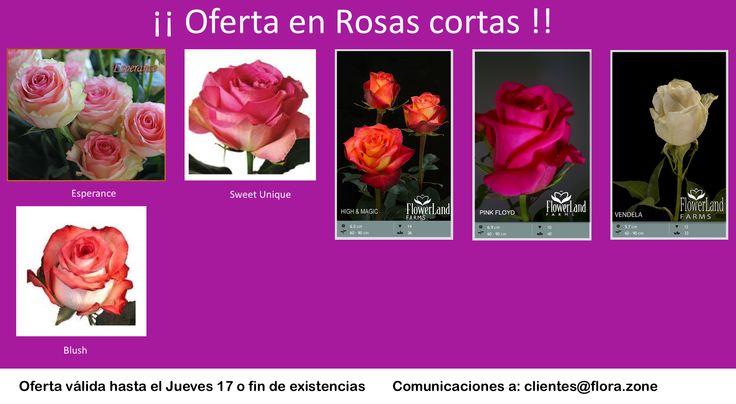 Rosas Interesantes!