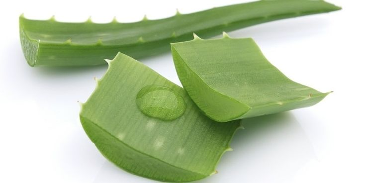 8 Manfaat Penting Lidah Buaya Bagi Kesehatan Tubuh Dan Kecantikan - http://www.ngegas.com/8-manfaat-penting-lidah-buaya-bagi-kesehatan-tubuh-dan-kecantikan/