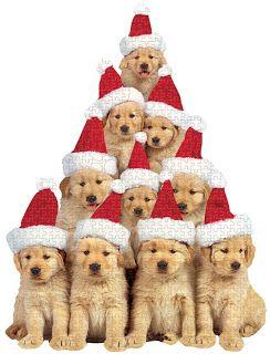 Happy Holidays - Dogmas Tree  OMG! WHAT'S YOUR BREED? I WANT UUUUUUUUU...SOOOO CUTEEEE!!!!!!!