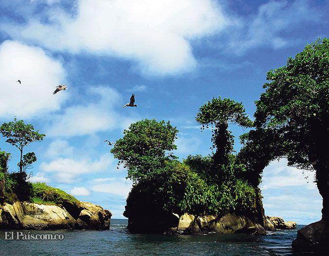 parque nacional natural uramba bahía málaga flora fauna - Buscar con Google