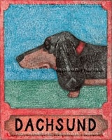 Dachshund Halo Crayon - Giclee  What a little angel! Stephen Huneck loved the Dachshund breed and his crayon drawing is a true testament of how he felt about this four-legged friend.
