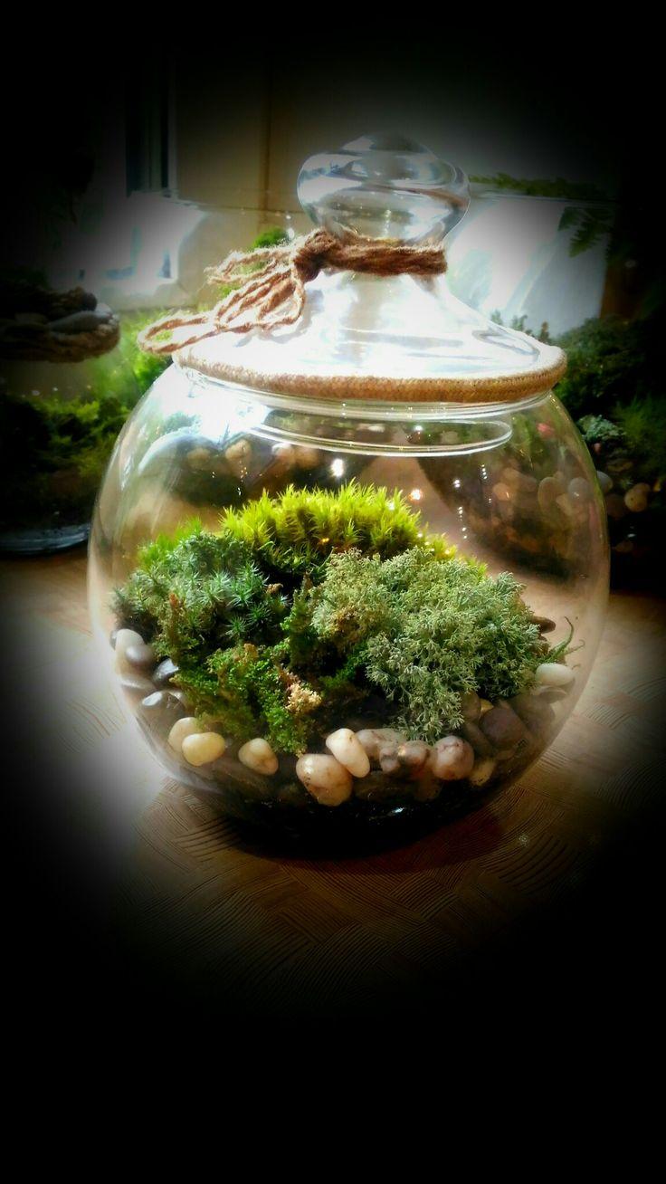 Флористическая вселенная  Я создаю для Вас зелёные миры...