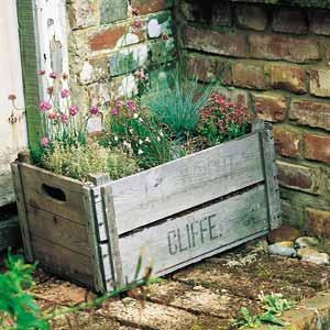 herb garden in a wooden crate
