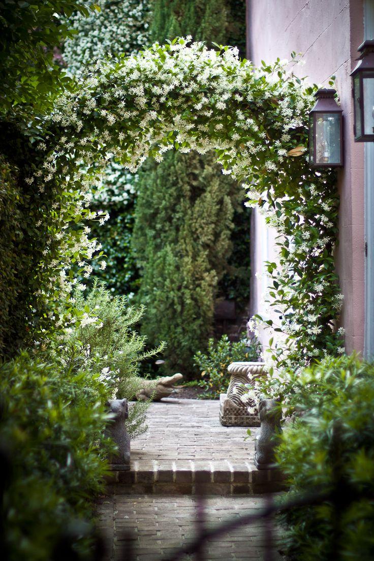 "Flowering vines : ourcharlestonlife: ""  Garden with Confederate jasmine and alligator 3 Philadelphia Alley, Charleston, SC """