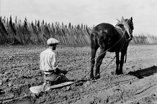 Lhiver, moins harassant, exige tout de même son quota de travail. En préparant le terrain pour la culture des poireaux, ce paysan repart vers une nouvelle année de travail. France, 1930. © Jacques Boyer / Roger-Viollet