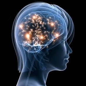"""The Human Neocortex is More Complex than a Galaxy"" article"