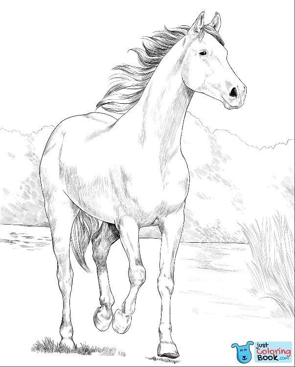 Shagya Arabian Horse Coloring Page Free Printable Coloring Pages With Download Printable Shagya Arabi Horse Coloring Pages Horse Coloring Books Horse Coloring