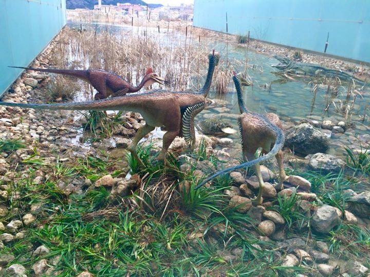 Exposición en el Museo de Paleontología de Cuenca