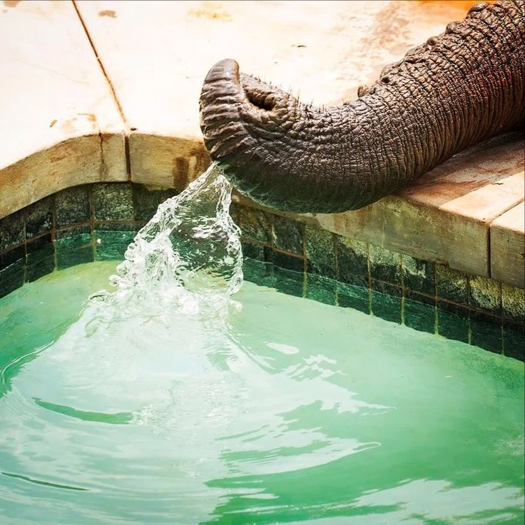 Would you mind sharing the pool with a few very thirsty elephants here at @mhondorogamelodge? If you don't mind sharing our pool visit www.mhondoro.com or email res@mhondoro.com to book your stay with us. Image: instagram.com/yoospics