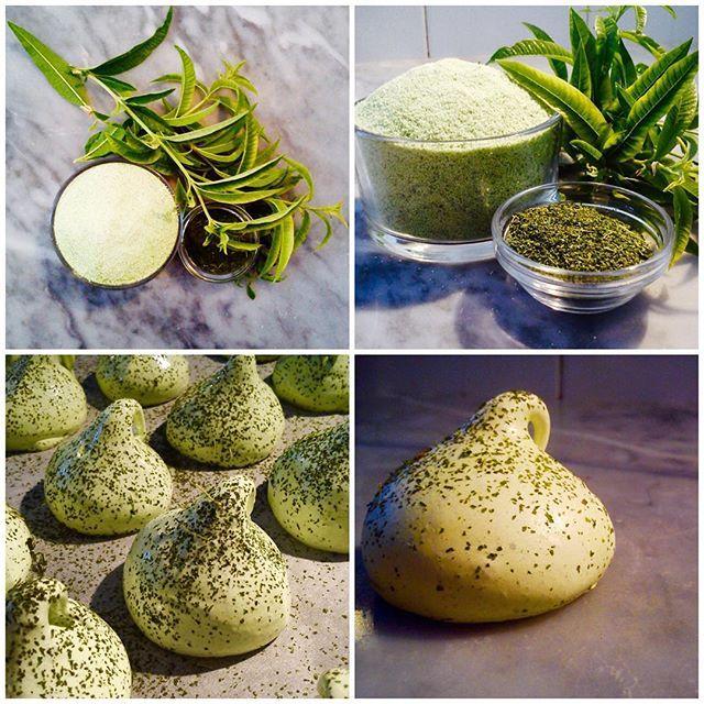 You are looking at #lemonverbena sugar powder and #meringue (pre and post drying) #tasteofthesummer #groweatshare  #desserts #sweetherbs #italianfood