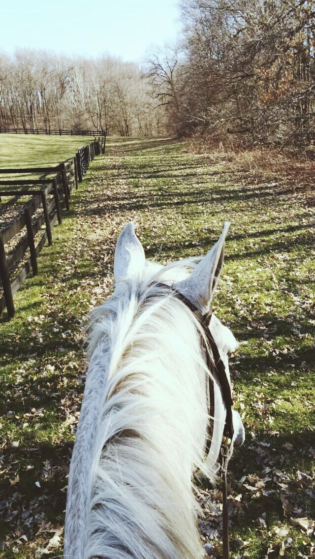 I love these rides when we take the horses on trails. We try to start them young but sometimes it is not possible. It can be a challenge for some but if it is possible it can be rewarding for everyone.